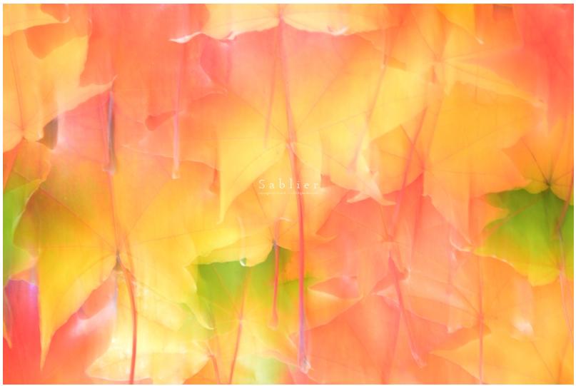 美しい秋にうっとり!ピックアップブロガー「S a b l i e r」のRicoさんの秋のフォトギャラリー!_f0357923_17532418.jpg