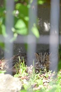 盛岡動物公園_c0299631_23443783.jpg