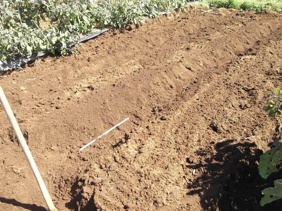 イチゴの定植場所出来上がりました。_b0137932_17102338.jpg