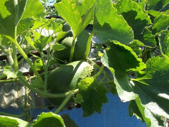 イチゴの定植場所出来上がりました。_b0137932_17112289.jpg