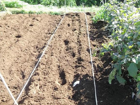 イチゴの定植場所出来上がりました。_b0137932_1795531.jpg