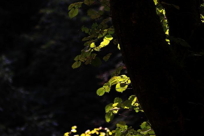 秋もそこまで_a0294534_20552794.jpg