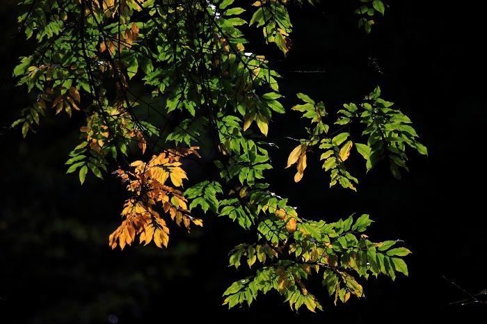 秋もそこまで_a0294534_2056532.jpg