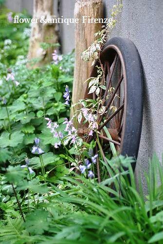 *庭に有るタイヤ・・・*_e0159050_17301142.jpg