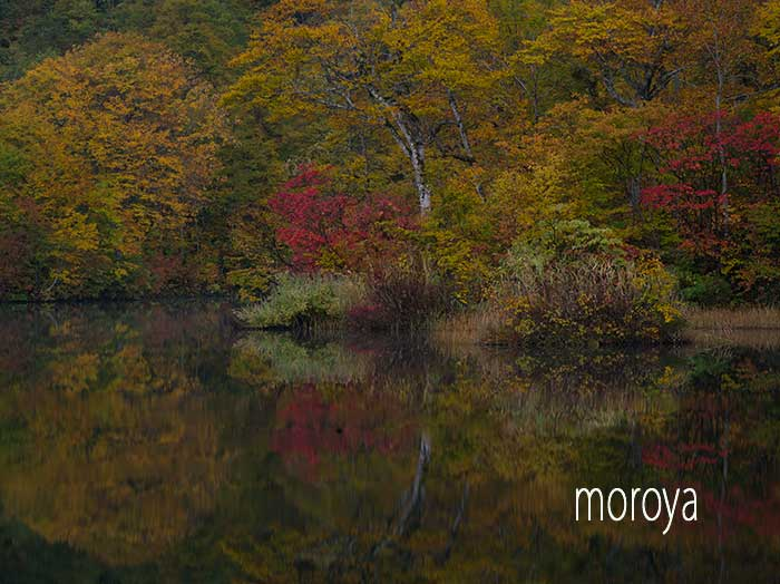 秋の鎌池_c0085877_07155530.jpg