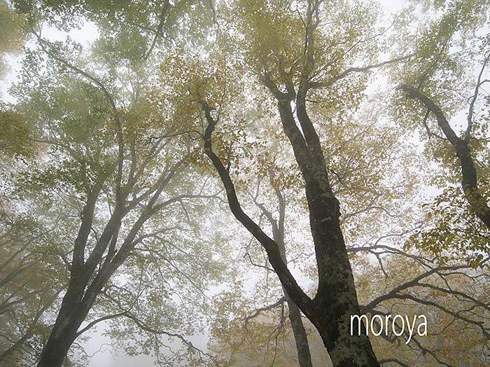 秋の鎌池_c0085877_07162152.jpg