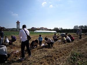 本日サツマイモ収穫体験_d0120421_12321569.jpg