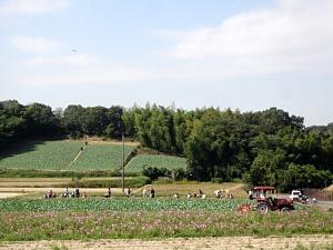 本日サツマイモ収穫体験_d0120421_12323278.jpg