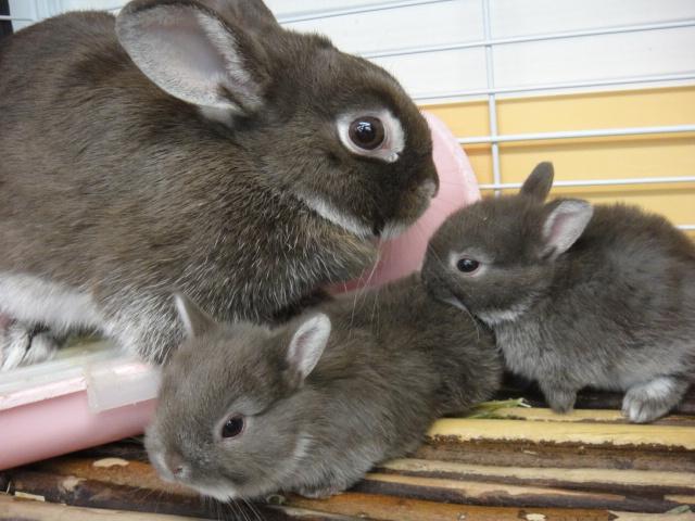 141018 ウサギ・マウス_f0189122_14372122.jpg