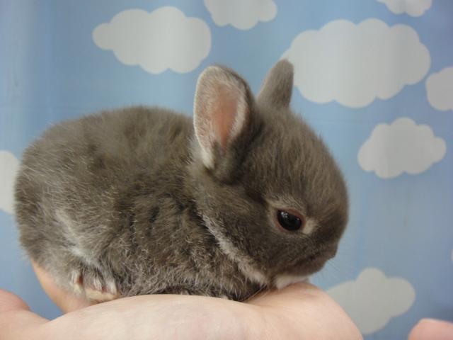 141018 ウサギ・マウス_f0189122_14373044.jpg