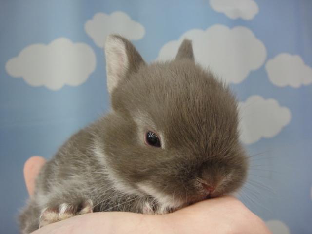 141018 ウサギ・マウス_f0189122_14373853.jpg
