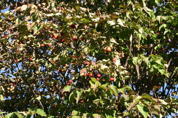 葉っぱの赤・黄・緑_b0174425_1711566.jpg