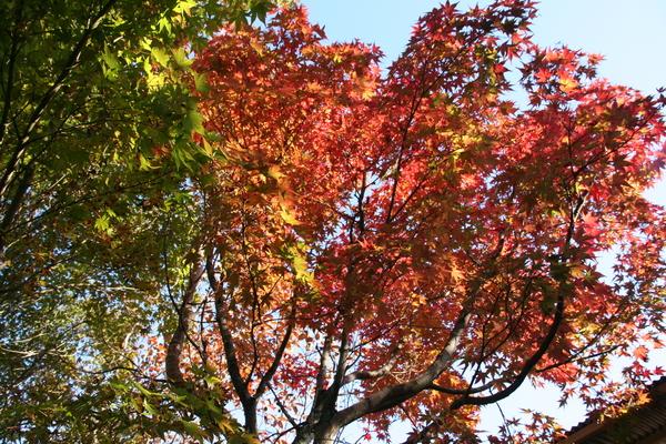葉っぱの赤・黄・緑_b0174425_1713192.jpg