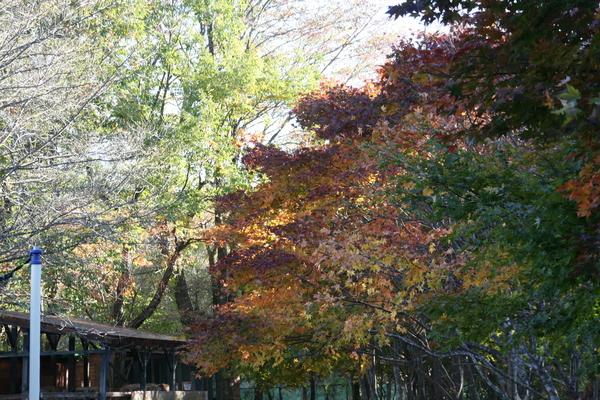 葉っぱの赤・黄・緑_b0174425_17135121.jpg