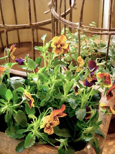 garden goods。。。_a0229658_13101849.jpg