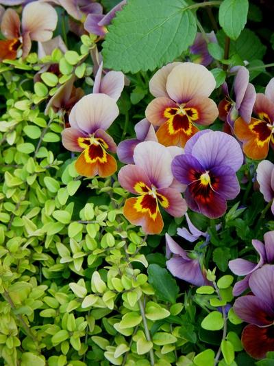garden goods。。。_a0229658_13112521.jpg