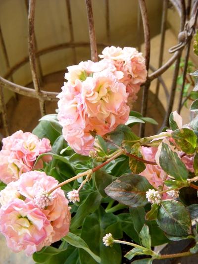garden goods。。。_a0229658_13522538.jpg
