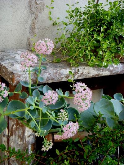 garden goods。。。_a0229658_14242911.jpg