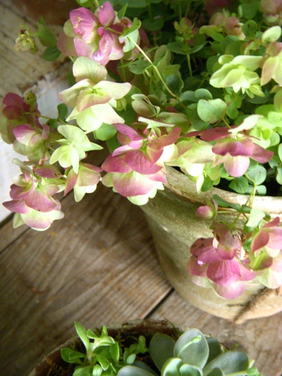 garden goods。。。_a0229658_1495280.jpg