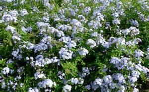 '14,10,18(土)庭仕事と幸せな時間!_f0060461_1555612.jpg