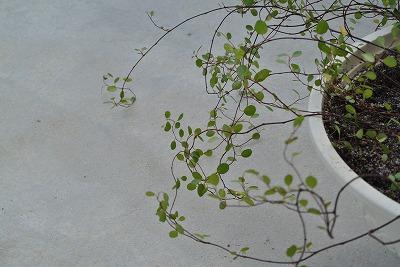 木の実が熟して落ちるように _d0240469_8264544.jpg