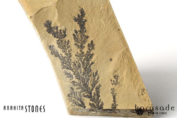 デンドライト原石(アメリカ・ユタ州産)_d0303974_15165819.jpg
