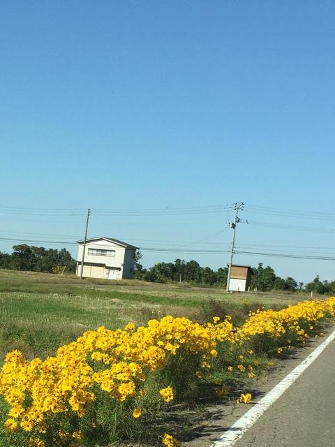 今年もヤナギバヒマワリが花盛り_d0182179_20345626.jpg