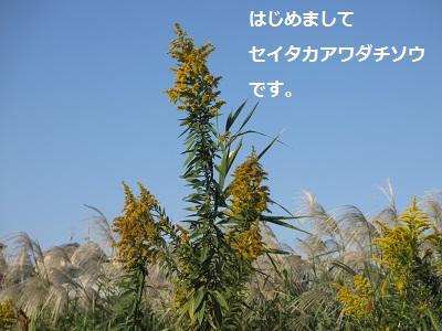 f0068501_10335638.jpg