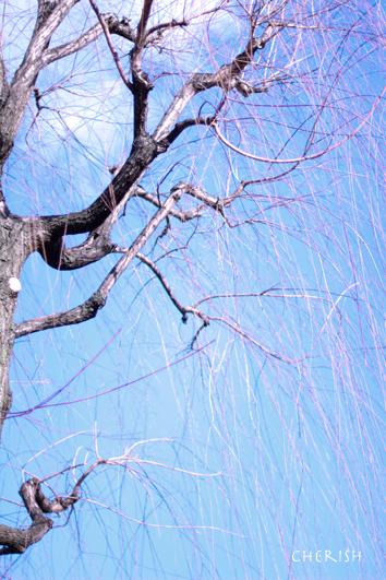 祇園「白梅」_b0208604_14564253.jpg