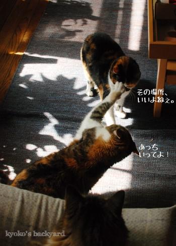 午後に繰り広げられるドラマ_b0253205_03320814.jpg