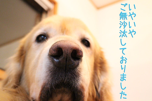 e0072606_20113551.jpg