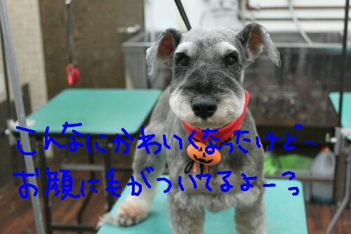 b0130018_0123167.jpg