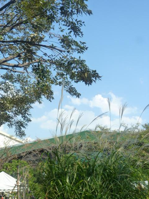 秋の風、工房からの風..._f0340942_19060976.jpg