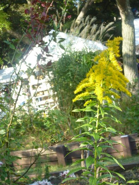 秋の風、工房からの風..._f0340942_19062823.jpg