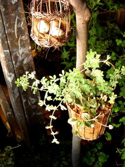 garden goods。。。_a0229658_9344100.jpg