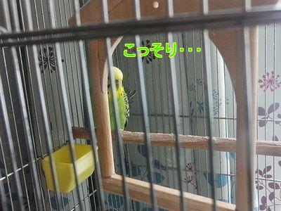 f0196665_21255921.jpg
