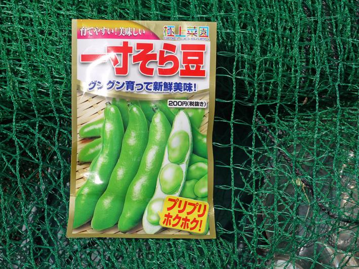 青クビダイコン初収穫、ソラマメとエンドウの種蒔き:10・17_c0014967_1102162.jpg