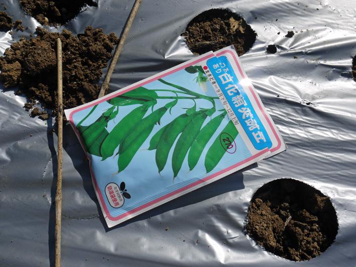 青クビダイコン初収穫、ソラマメとエンドウの種蒔き:10・17_c0014967_1104988.jpg