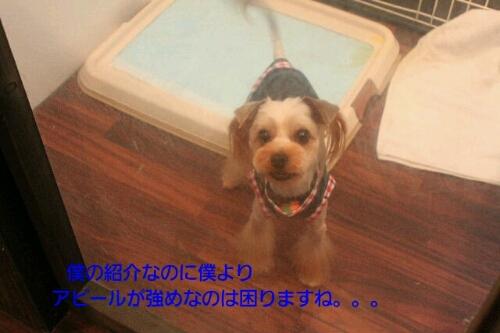 b0130018_16344812.jpg