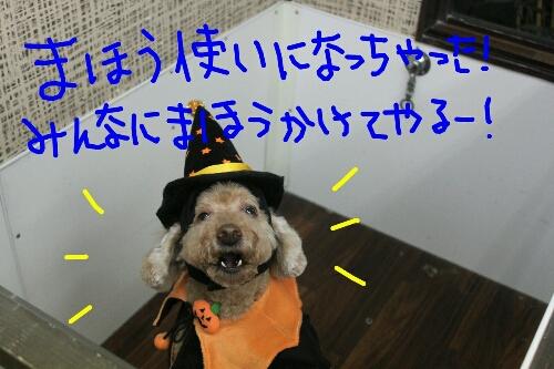 b0130018_201478.jpg