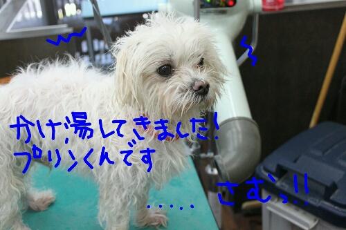 b0130018_2025875.jpg