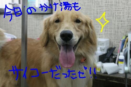 b0130018_20303324.jpg