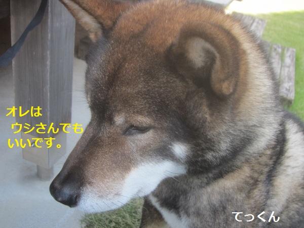 f0143123_925774.jpg
