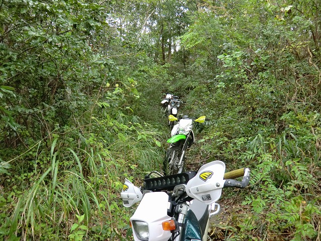 雨のお山に行ってきました!_e0114857_10433833.jpg