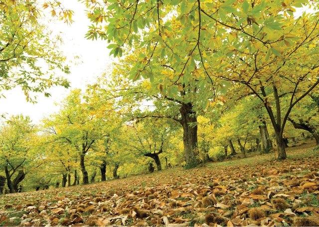 秋の恵み_e0224461_17481940.jpg
