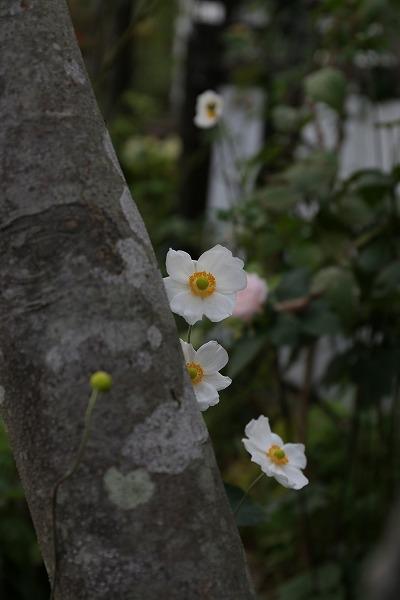 今日の庭は・・_a0135366_19465869.jpg