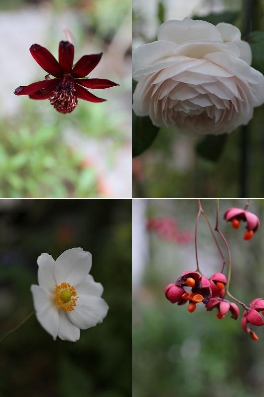 今日の庭は・・_a0135366_1948327.jpg