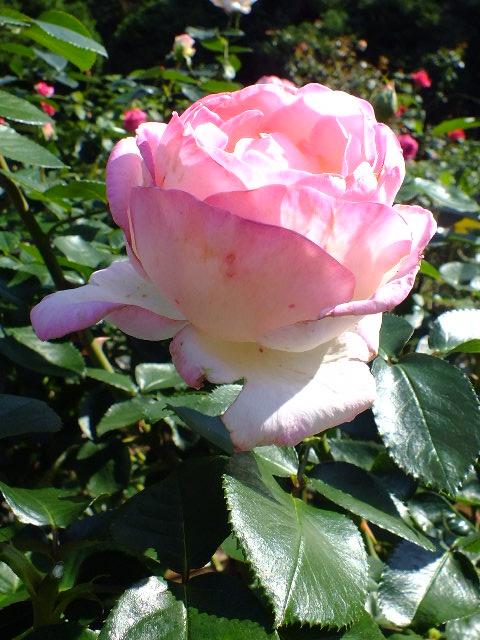 10月19日 横浜こども植物園 その1_e0145782_4425861.jpg