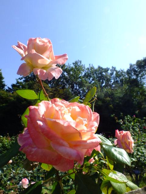 10月19日 横浜こども植物園 その1_e0145782_4441879.jpg