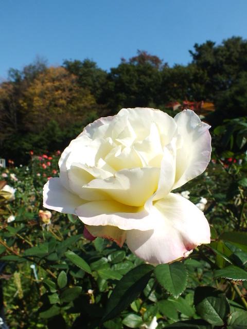 10月19日 横浜こども植物園 その1_e0145782_445274.jpg